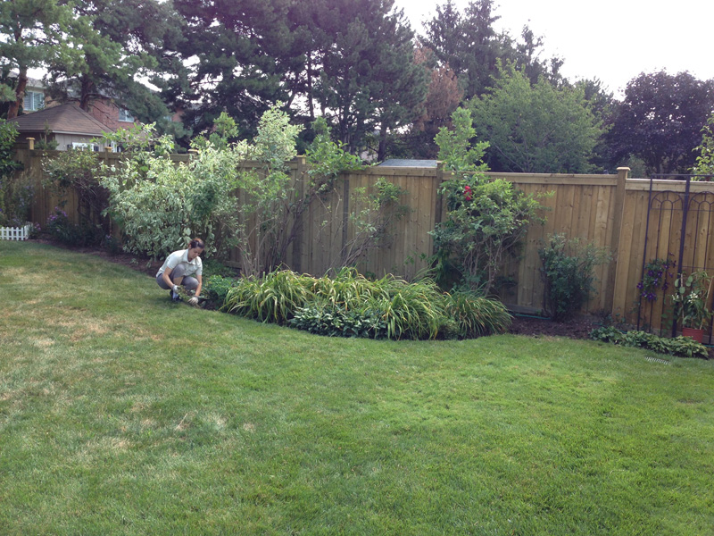 Backyard Landscaping Oakville : Lawn maintenance gallery burlington care