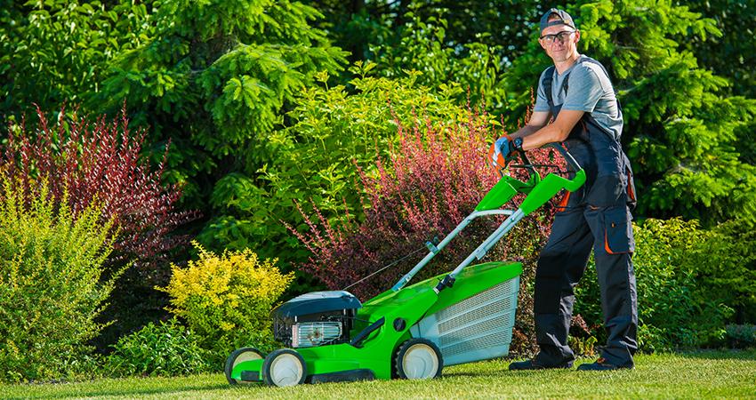 Lawn care burlington lawn care for Lawn treatment companies